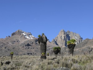 Alessio Mount Kenya.2