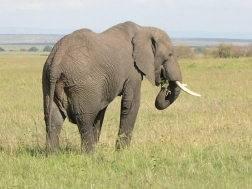 Amboseli - Tsavo Safaris 5 days